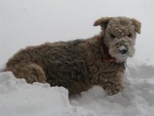 Daisy 02/2010