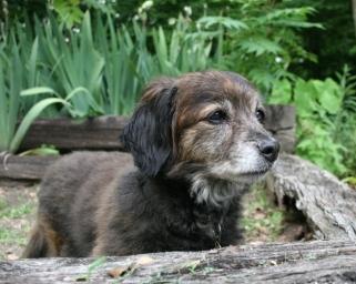 Pookie 06/2011